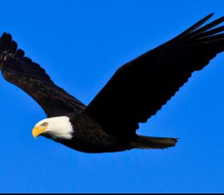 2021 Lumen Gala - SPONSOR - FLYING EAGLE $500